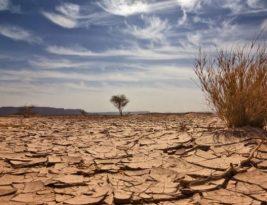 Relatório da Agência Nacional das Águas confirma seca em todos os municípios da Paraíba