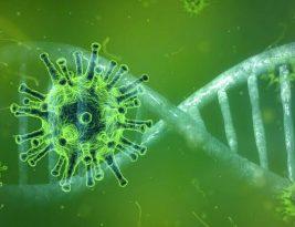 Brasil chega ao Dia de Finados com 5.544.815 casos confirmados de coronavirus e 160.104 mortes